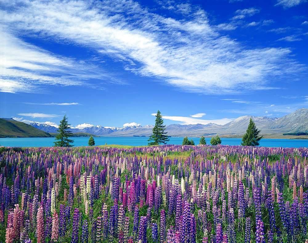 Flower field - 1172-4313