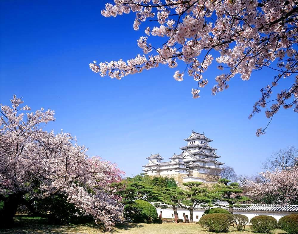 Himeji Castle and Cherry Blossom, Hyogo, Japan