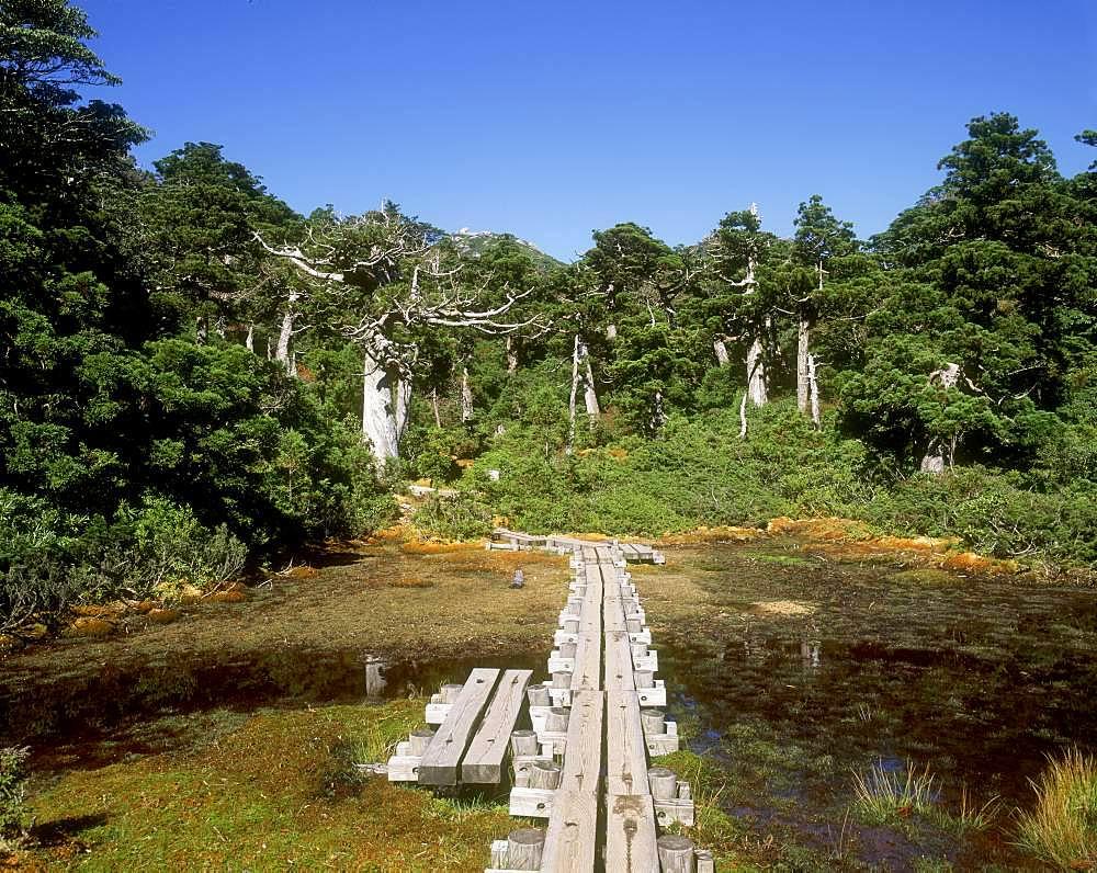 High Wetlands, Yakushima, Kagoshima Prefecture
