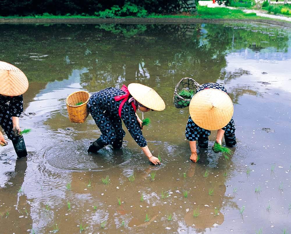 Taue Festival, Shirakawa-go, Gifu Prefecture, Japan