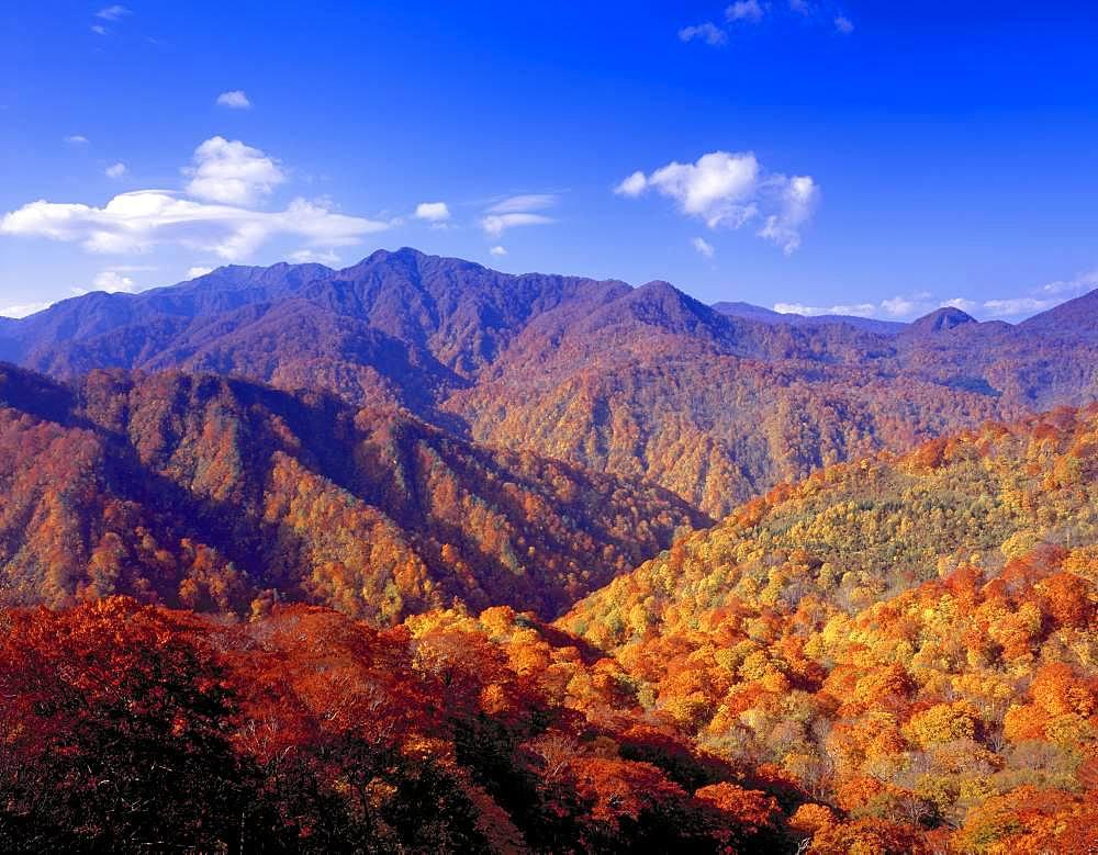 Shirakami-Sanchi, Aomori, Japan