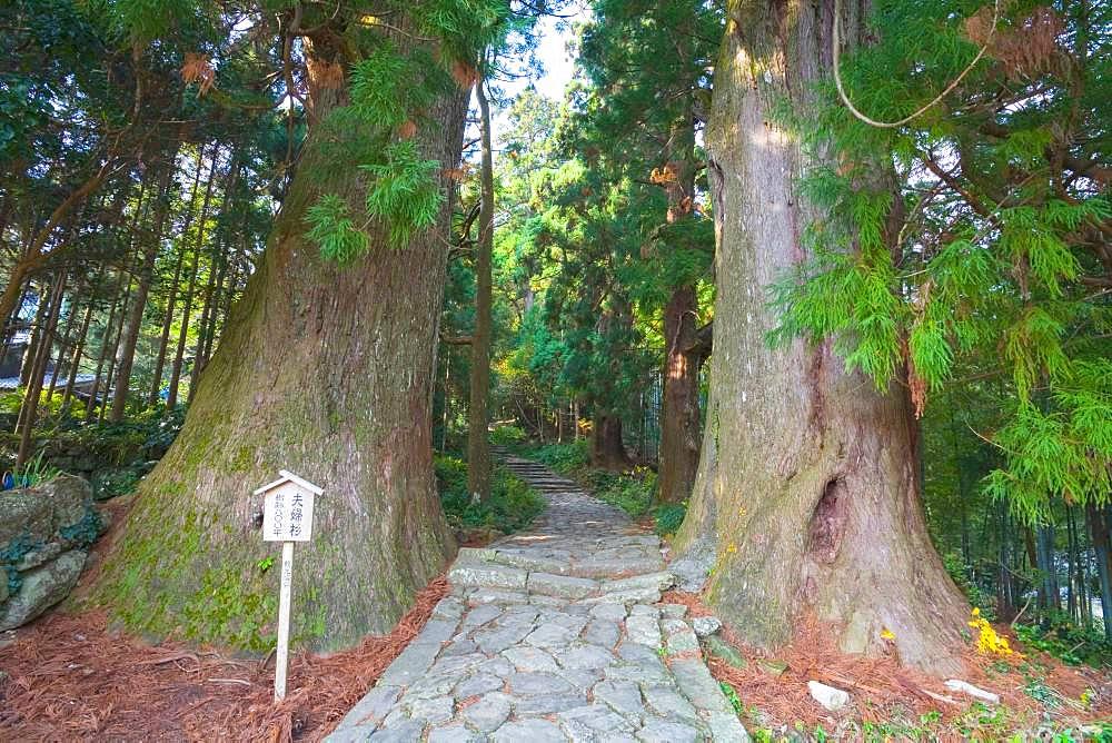 Kumanokodo, Wakayama, Japan