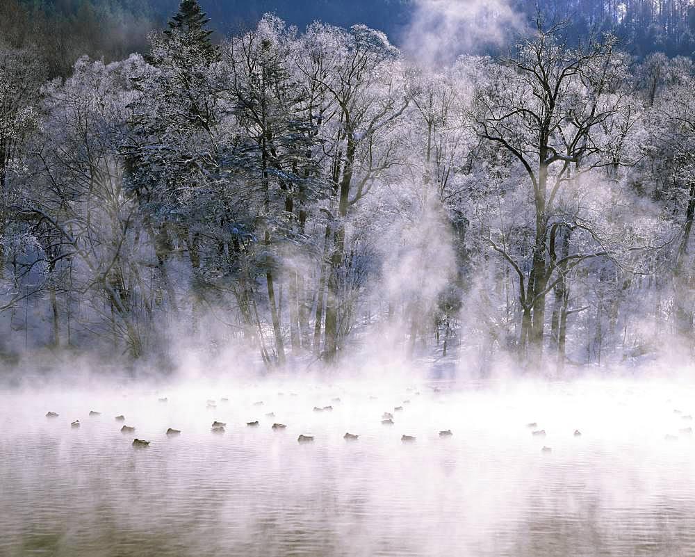 Furano City, Hokkaido - 1172-5013