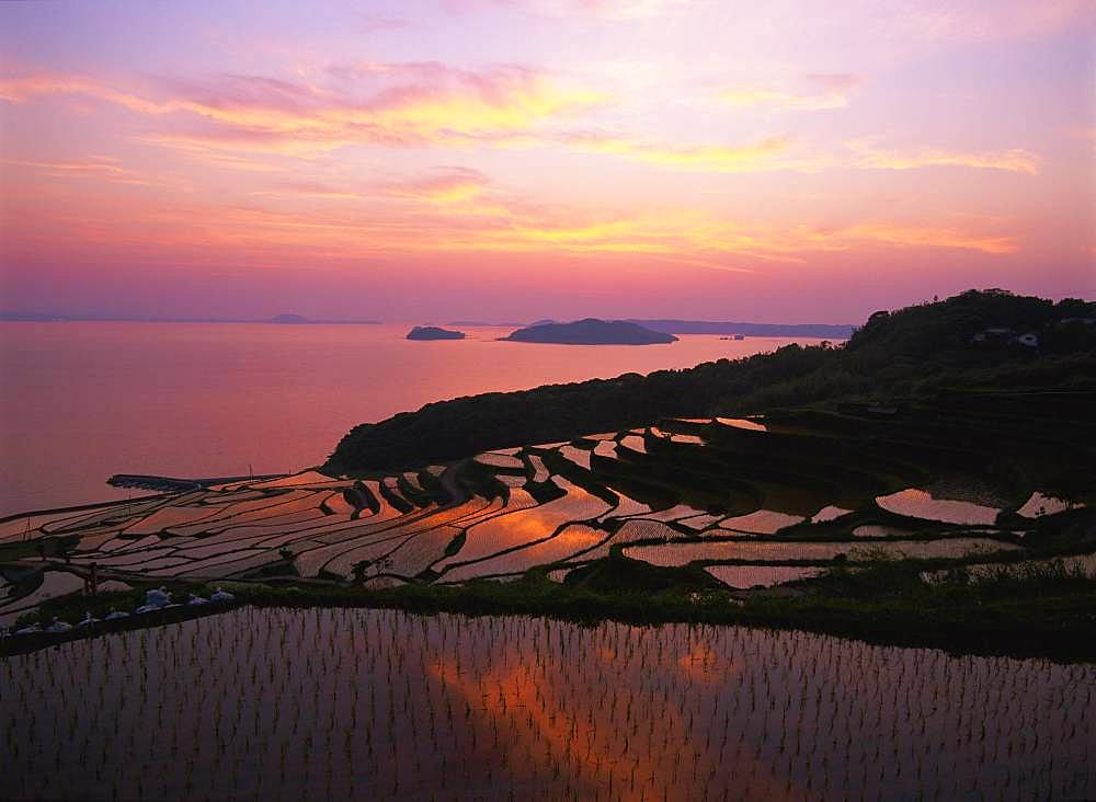 Terraced Rice Field, Tsuchida, Nagasaki Prefecture
