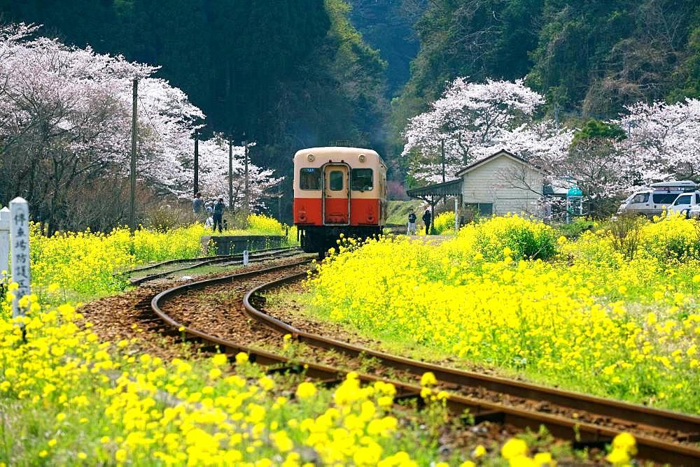 Ichihara City, Chiba Prefecture - 1172-5076