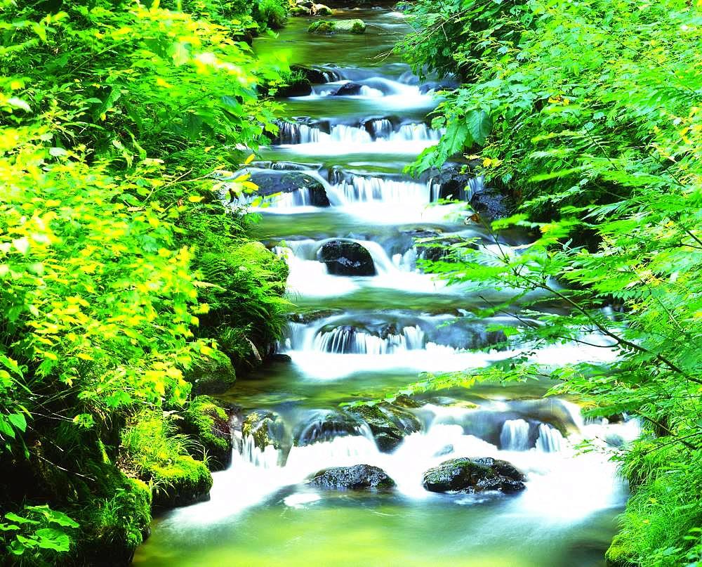 Clear Stream, Niigata Prefecture