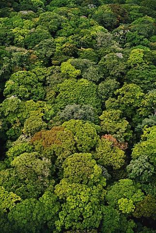 Rainforest canopy aerial view, Congo, DRC, Democratic Republic of the Congo