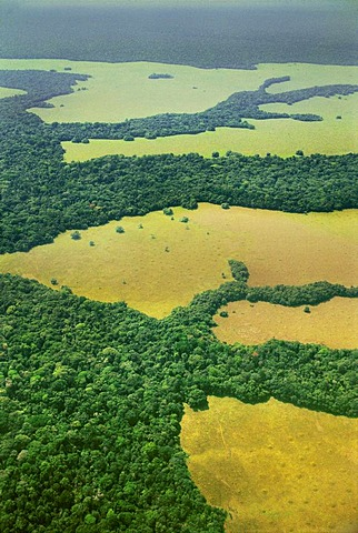 Mixed forest and savanna habitat, aerial view, Congo, DRC, Democratic Republic of the Congo