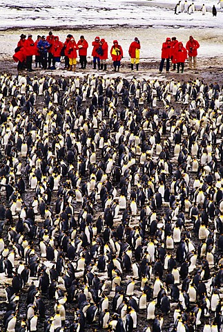 Tourists visiting King Penguin colony, South Georgia Island