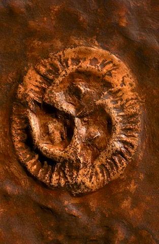 Ediacarian fossil, Tribrachidium heraldicum, Sydney Museum, Australia