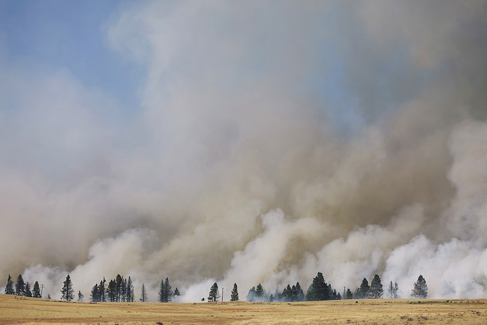 A large forest fire near Ellensburg in Kittitas county. Smoke rising above trees, Ellensburg, Kittitas County, Washington, USA