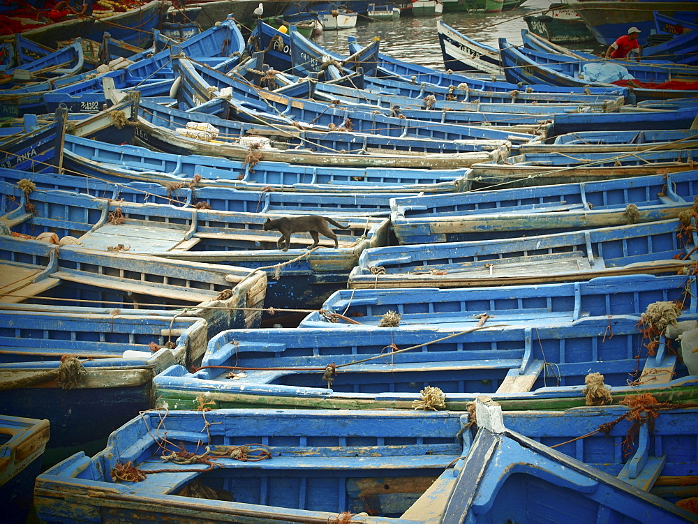 Blue wooden fishing boats moored close together in the harbour of Essaouira, Morocco - 1175-1009