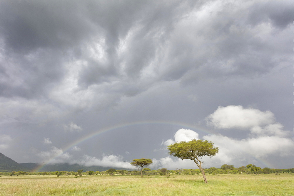 A rainbow in the Serengeti Wildlife Reserve, Tanzania, Africa