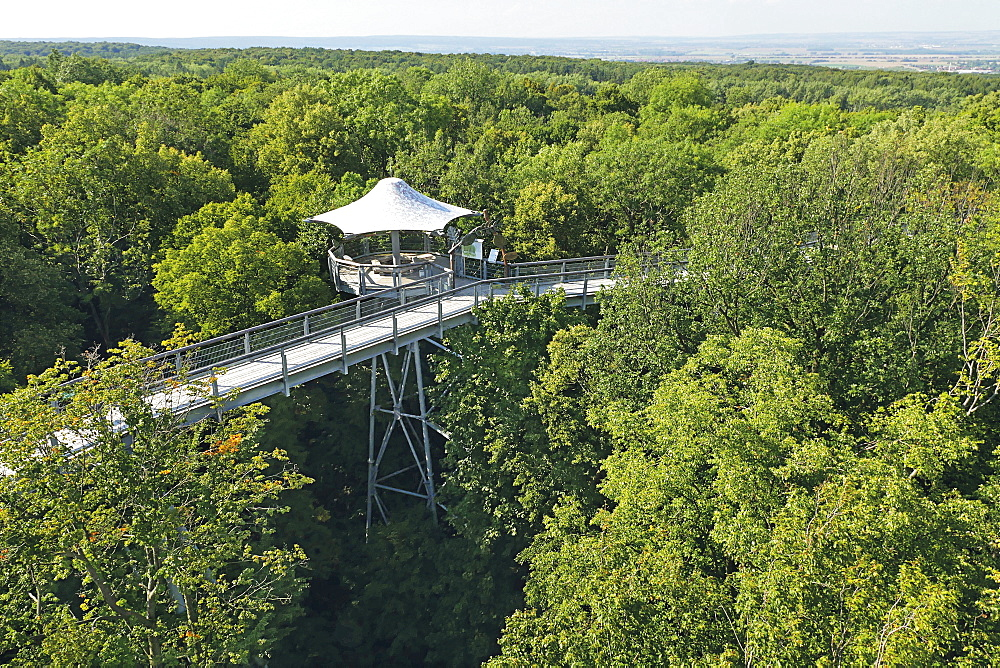 The treetop walkway in the Hainich National Park, Thuringia, Germany - 1175-1410