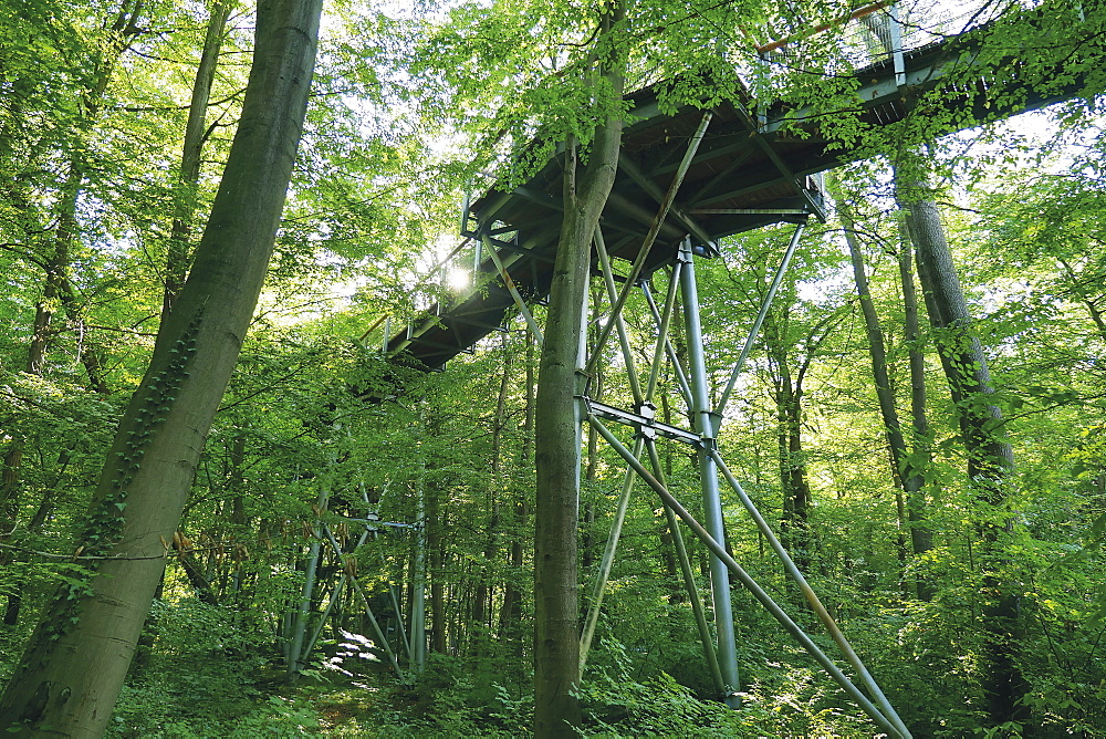 The treetop walkway in the Hainich National Park through the beech tree in Thuringia, Germany