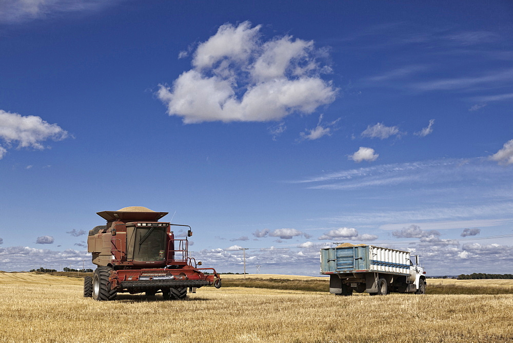 Trucks and harvester at cornfield, Saskatchewan, Canada