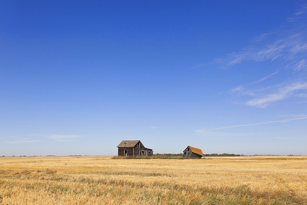 View of abandoned houses in cornfield on Highway 15, Saskatchewan, Canada