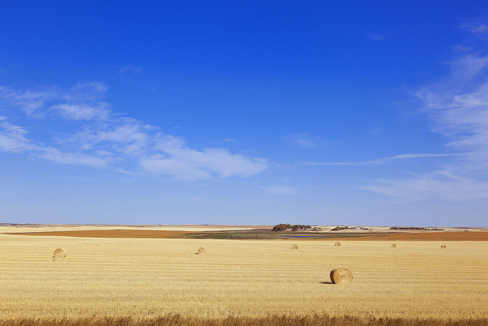 Hourses in field on highway 28 south, Saskatchewan, Canada