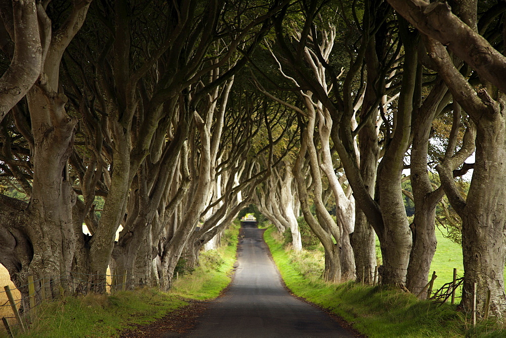 View of Dark Hedges avenue with lined beech trees, Ireland, UK