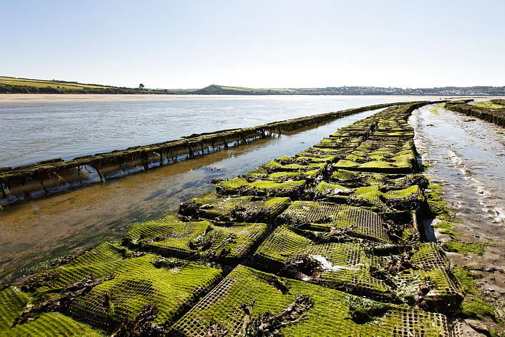 An oyster farm in Rock (Cornwall, England)