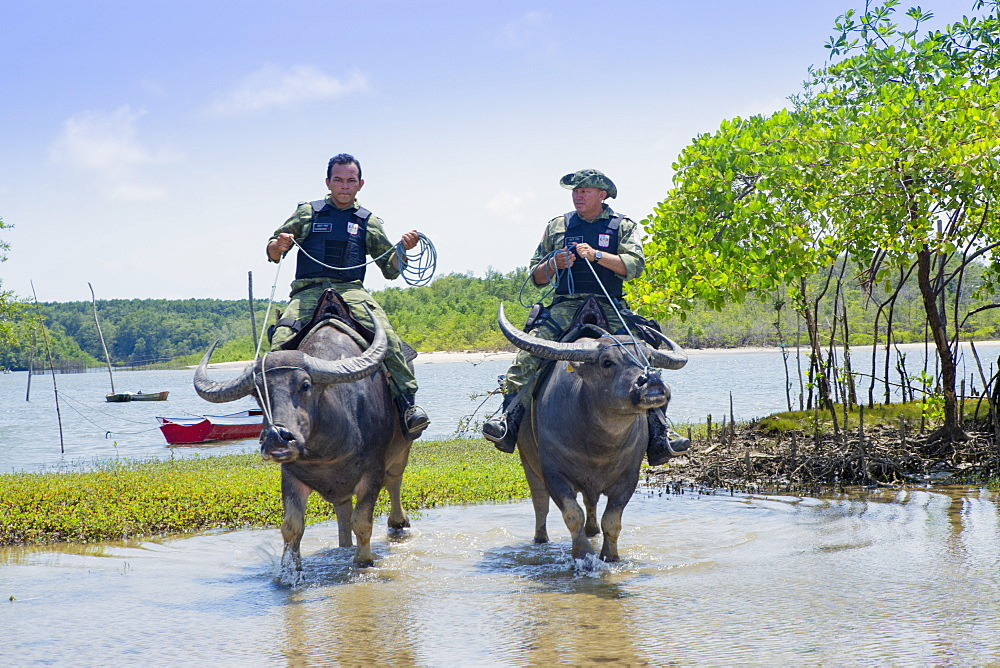 Armed policemen on buffalo back on Marajo Island in the Brazilian Amazon, Para, Brazil, South America