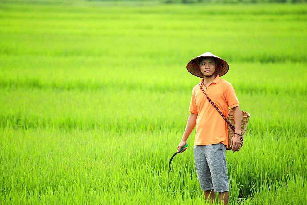 Farmer wearing a conical hat in rice fields, Mai Chau, Hoa Binh, Vietnam, Indochina, Southeast Asia, Asia - 1176-844