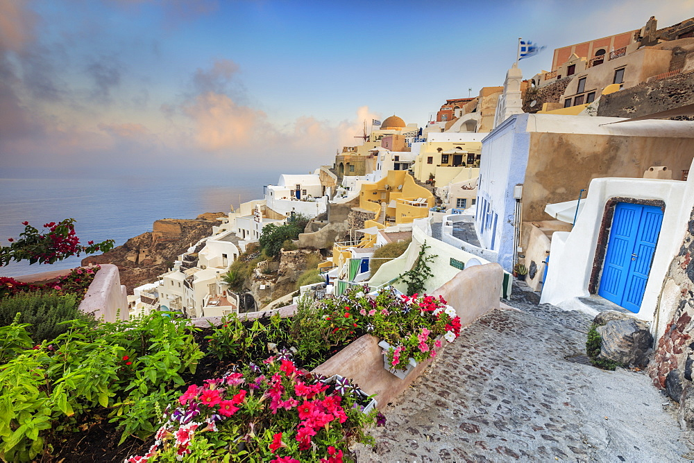 Bougainvillea flowers and typical houses on the Aegean Sea at sunrise, Oia, Santorini,  Cyclades, Greek Islands, Greece, Europe