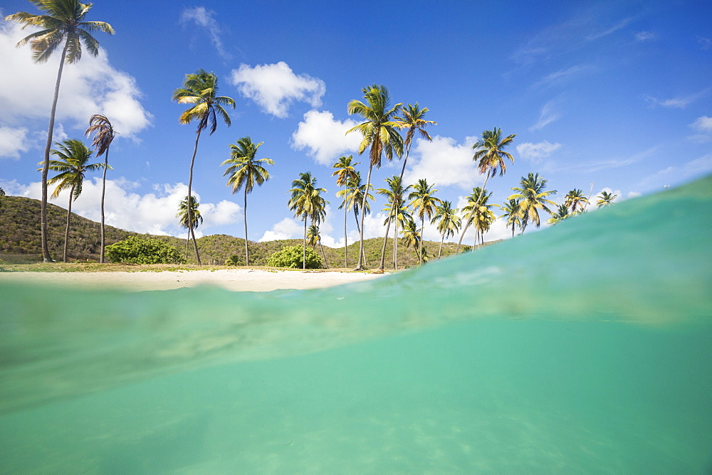 Underwater view of the sandy beach surrounded by palm trees, Morris Bay, Antigua, Antigua and Barbuda, Leeward Island, West Indies, Caribbean, Central America