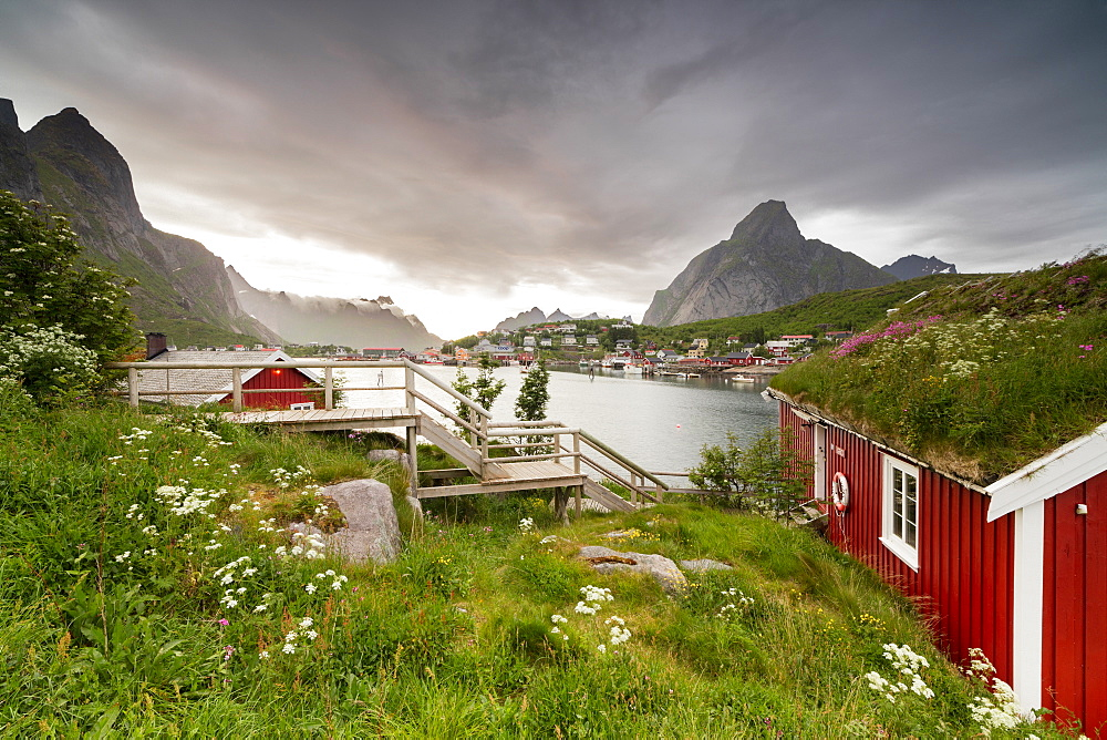 Green grass and flowers frame the typical Rorbu surrounded by sea, Reine, Nordland county, Lofoten Islands, Arctic, Northern Norway, Scandinavia, Europe
