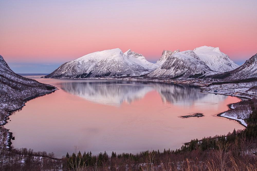 Pink sky at sunrise lights up the snowy peaks reflected in the cold sea, Bergsbotn, Senja, Troms County, Norway, Scandinavia, Europe