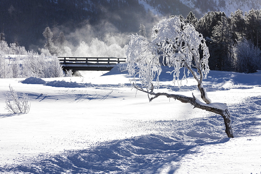 Frost on tree branches frames the snowy landscape, Celerina, Maloja, Canton of Graubunden, Engadine, Switzerland, Europe