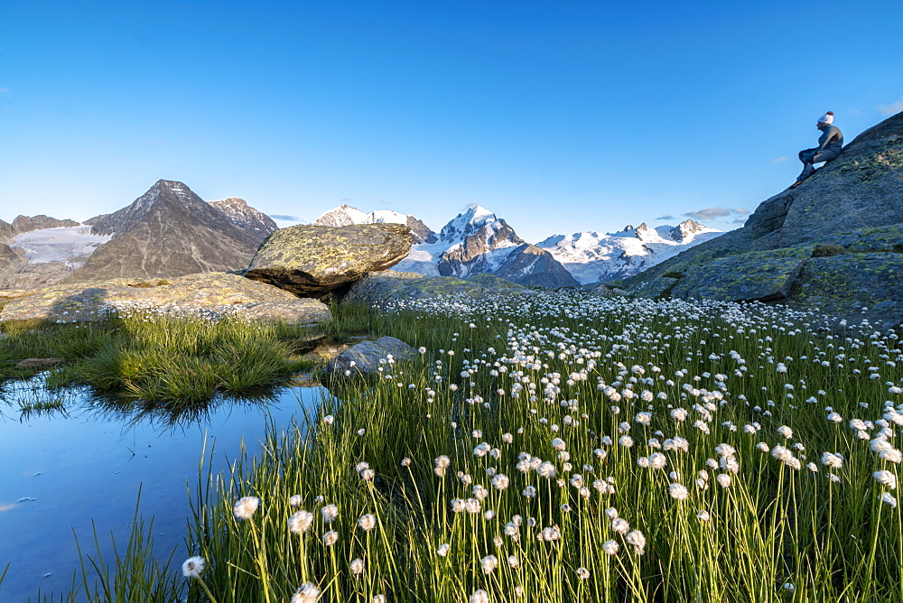 Hiker on rocks admires the blooming of cotton grass, Fuorcla, Surlej, St. Moritz, Canton of Graubunden, Engadine, Switzerland, Europe