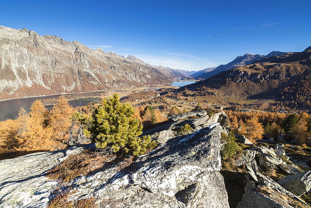 Colorful trees and blue sky frame Lake St. Moritz in the fall, Val Fedoz, Canton of Graubunden, Engadine, Switzerland, Europe