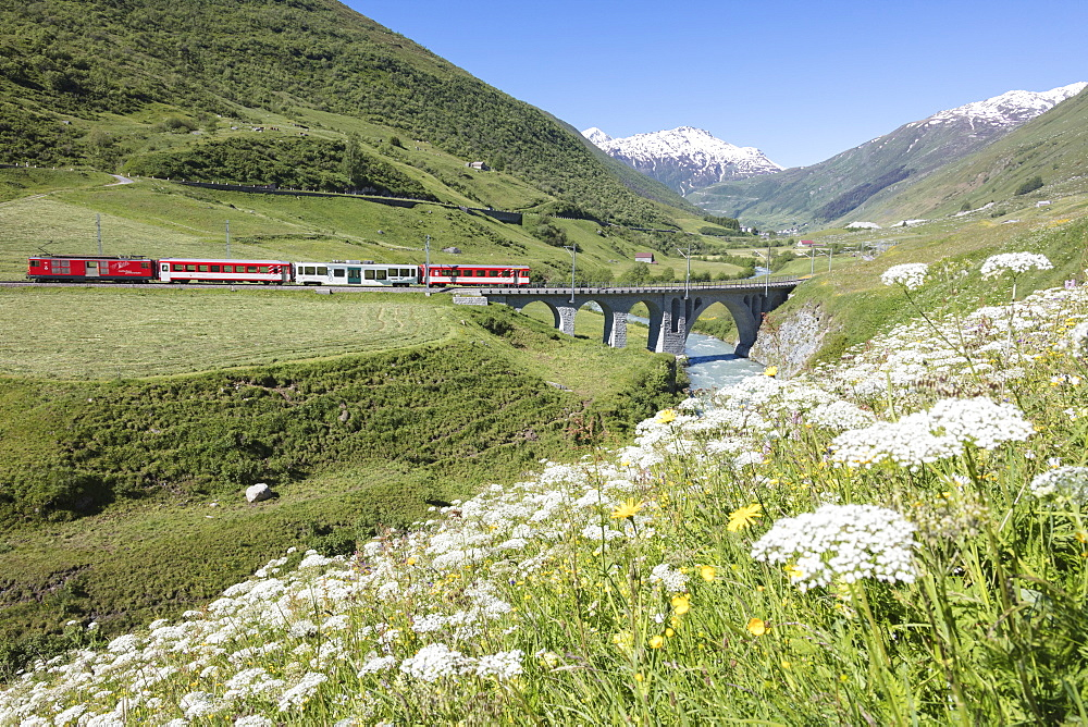 Typical red Swiss train on Hospental Viadukt surrounded by creek and blooming flowers, Andermatt, Canton of Uri, Switzerland, Europe