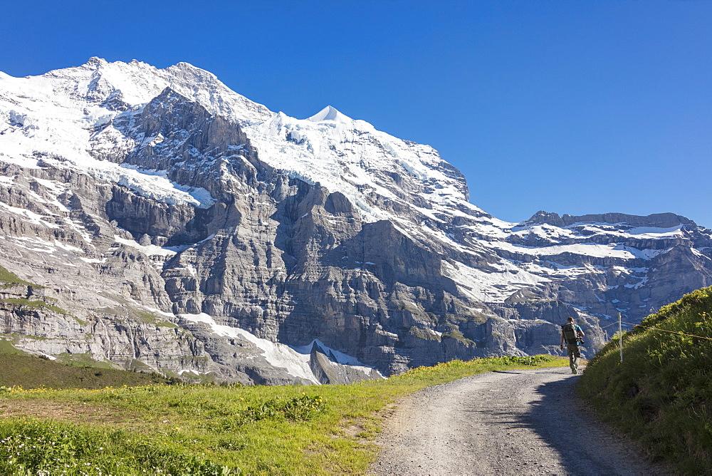 Hiker on the path between green meadows and snowy peaks, Wengernalp, Wengen, Bernese Oberland, Canton of Bern, Switzerland, Europe
