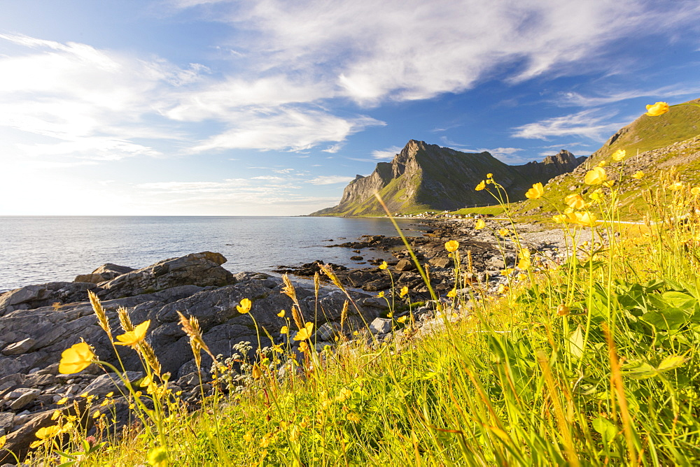 The sun shines on green meadows and flowers surrounded by sea at night, Vikten, Nord Trondelag, Lofoten, Norway, Scandinavia, Europe