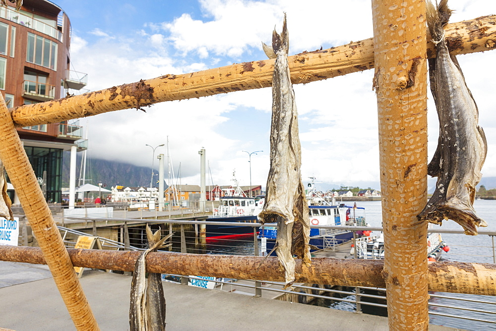 Details of the wooden rack with dried stockfish at the harbor of Svolvaer, Vagan, Lofoten Islands, Norway, Scandinavia, Europe