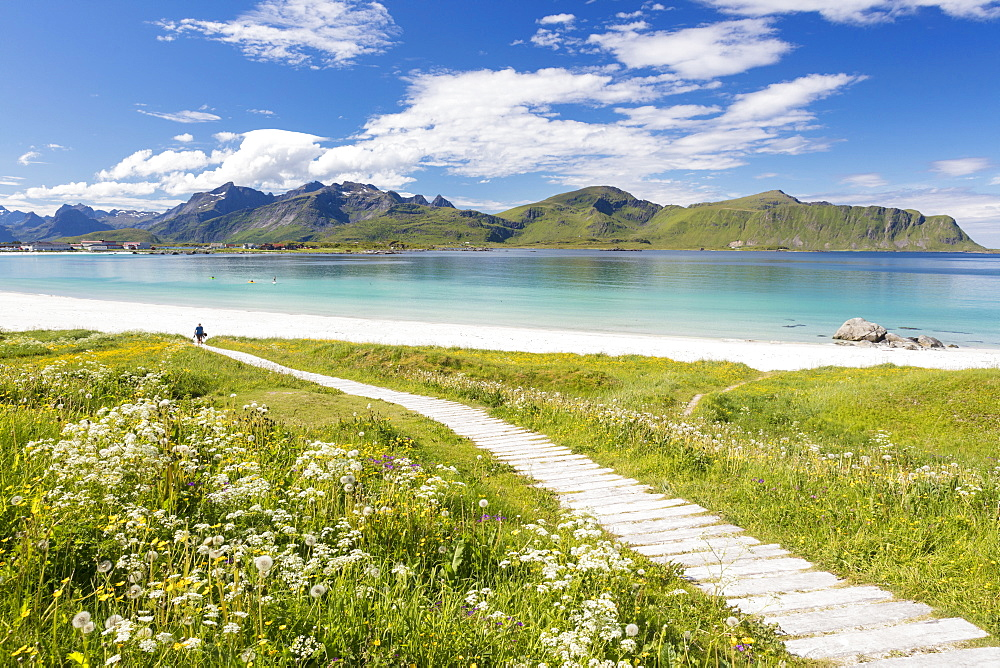 Green meadows and flowers surrounded by turquoise sea and fine sand, Ramberg, Lofoten Islands, Norway, Scandinavia, Europe