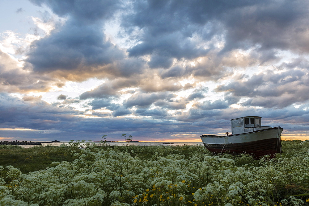 Pink clouds and midnight sun on an old boat in green meadows of blooming flowers, Eggum, Vestvagoy, Lofoten Islands, Norway, Scandinavia, Europe