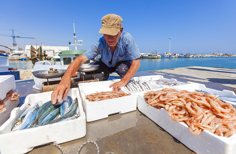 Fisherman sells fresh fish in the harbor of Licata, Province of Agrigento, Sicily, Italy, Mediterranean, Europe