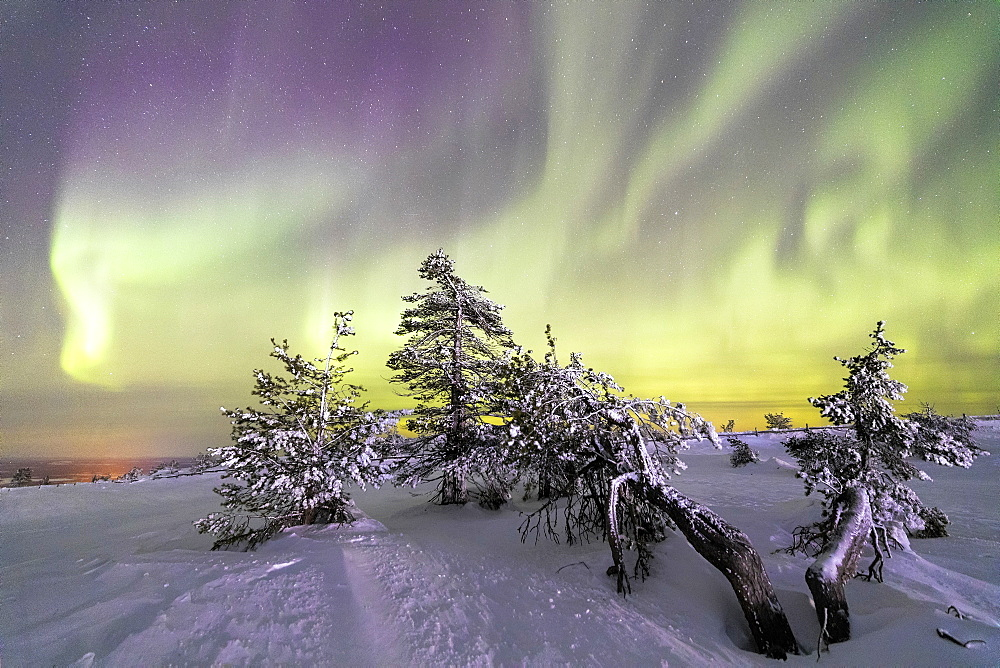Northern Lights (Aurora Borealis) and starry sky on the snowy landscape and the frozen trees, Levi, Sirkka, Kittila, Lapland region, Finland, Europe