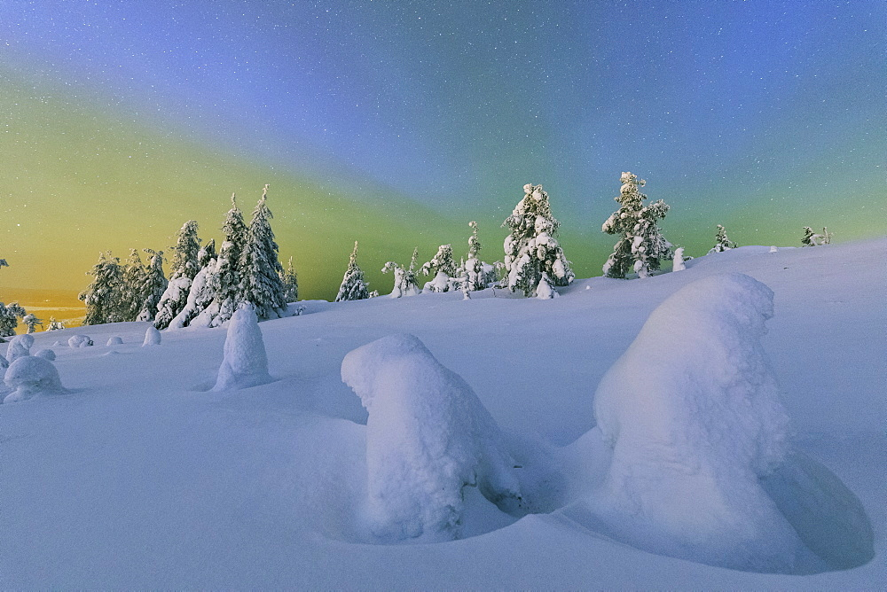 Colorful Northern Lights of the Aurora Borealis and starry sky on the snowy woods, Ruka, Kuusamo, Ostrobothnia region, Lapland, Finland, Europe