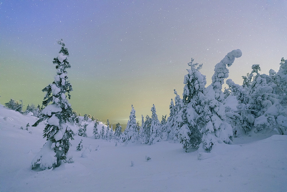 Frozen trees in snowy woods framed by starry sky in the cold polar night, Ruka, Kuusamo, Ostrobothnia region, Lapland, Finland, Europe