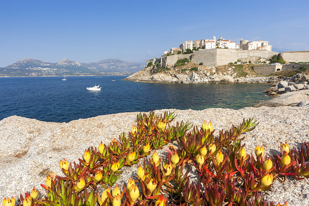 Flowers on rocks frame the fortified citadel surrounded by the clear sea, Calvi, Balagne Region, Corsica, France, Mediterranean, Europe