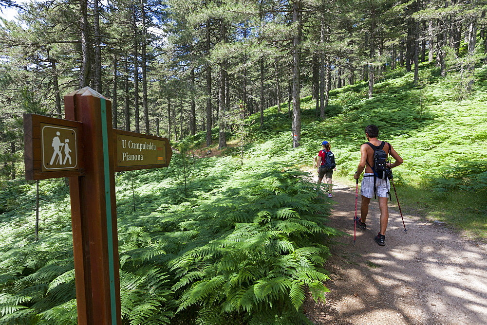 Hikers proceed on the path in the green woods of Col de Bavella (Pass of Bavella), Solenzara, Southern Corsica, France, Europe