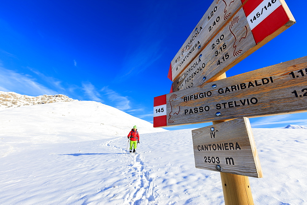 Hiker with snowshoe proceeds on the path covered with snow, Braulio Valley, Valtellina, Lombardy, Italy, Europe