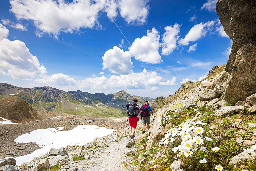 Hikers surrounded by rocky peaks and flowering daisies, Joriseen, Jorifless Pass, canton of Graubunden, Engadine, Switzerland, Europe