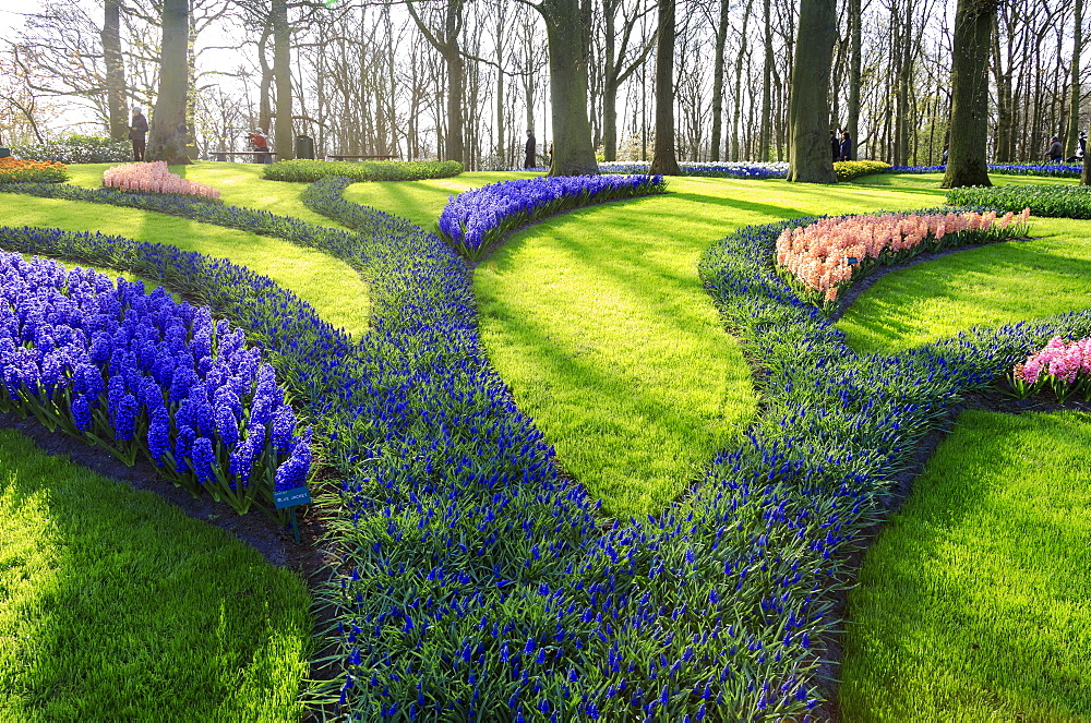 Green gardens of flowers in bloom in spring at the Keukenhof Botanical Garden, Lisse, South Holland, The Netherlands, Europe
