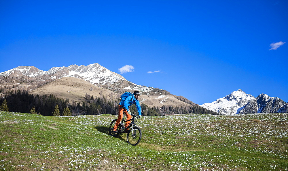 Mountain bike on green meadows covered by crocus in bloom, Albaredo Valley, Orobie Alps, Valtellina, Lombardy, Italy, Europe