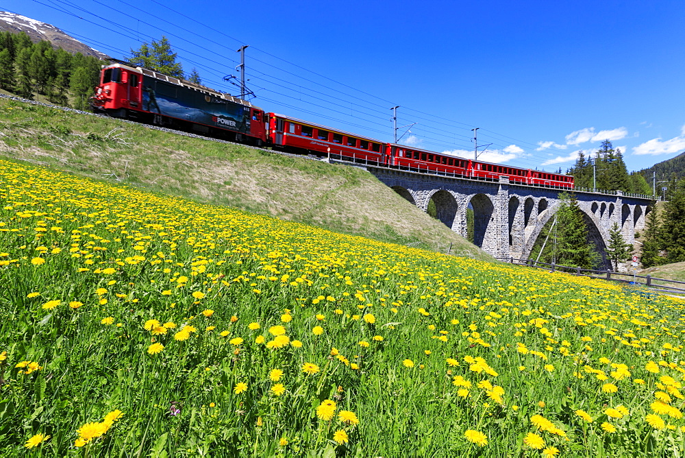 Bernina Express train on Cinuos-chel Viadukt in spring, St. Moritz, Majola, Canton of Graubunden, Switzerland, Europe
